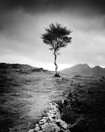 Strong birch