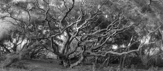 Oak forest 1