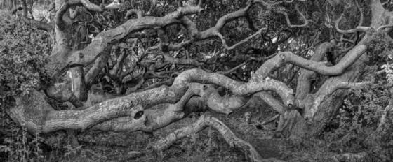 Oak forest 2