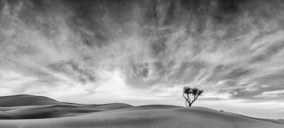 Liwa desert 1