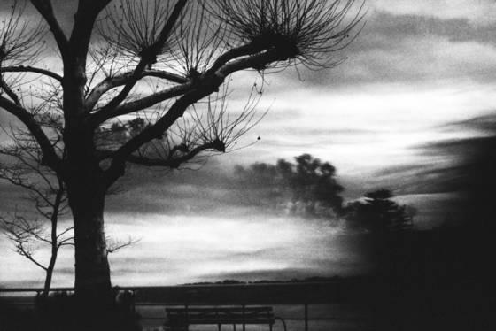 Winter tree at dusk