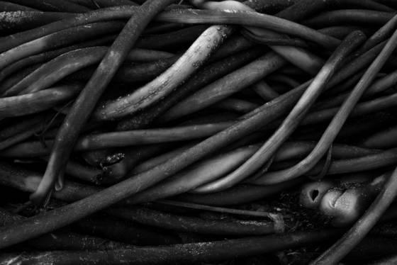 Seaweed tangle
