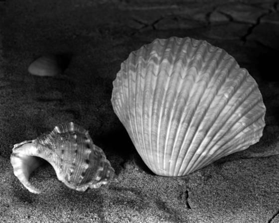 Double shells