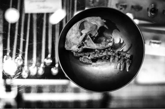 Cat skull in a bowl