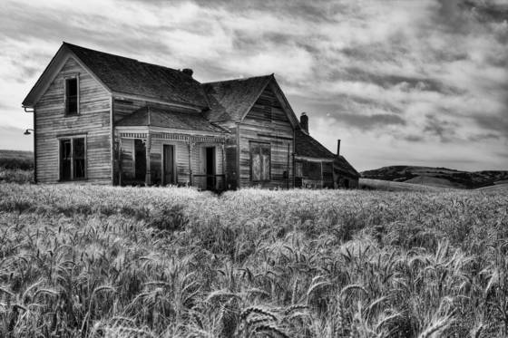 Old homestead in the wheatfields