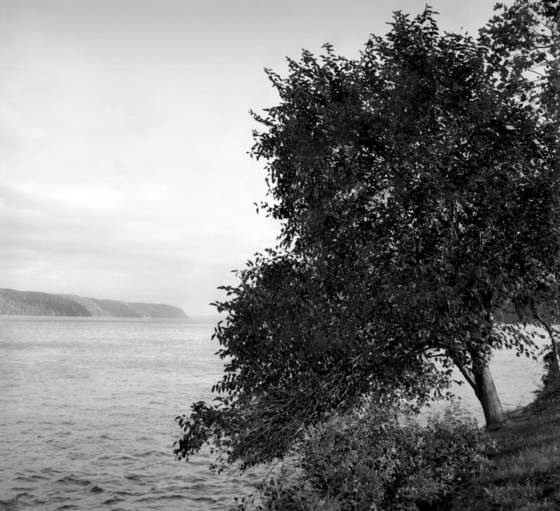 Tree along hudson river