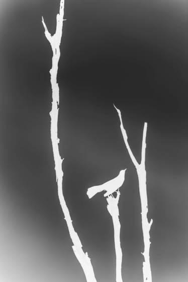 Bird in negative 3