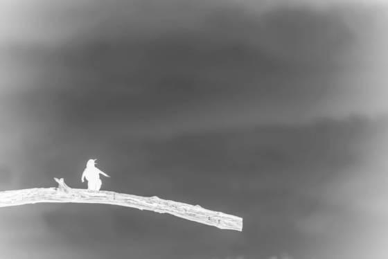 Bird in negative 7