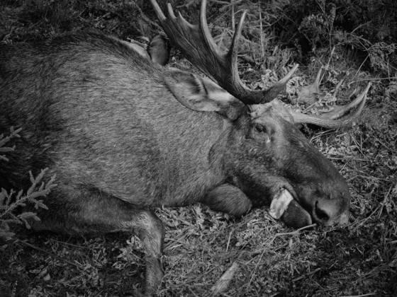 Elk hunting 3