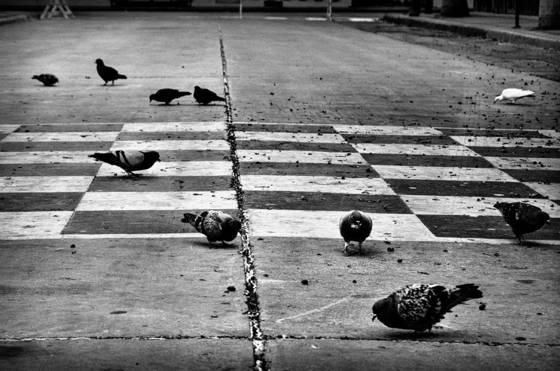 Checkered doves