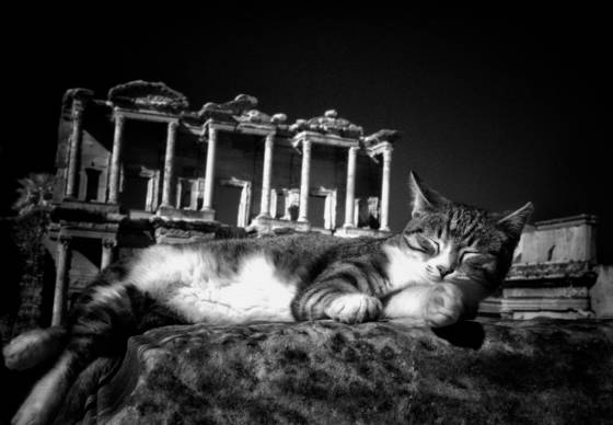 Cats at ephesus 2