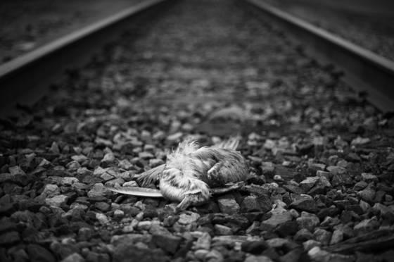 Dead bird  13