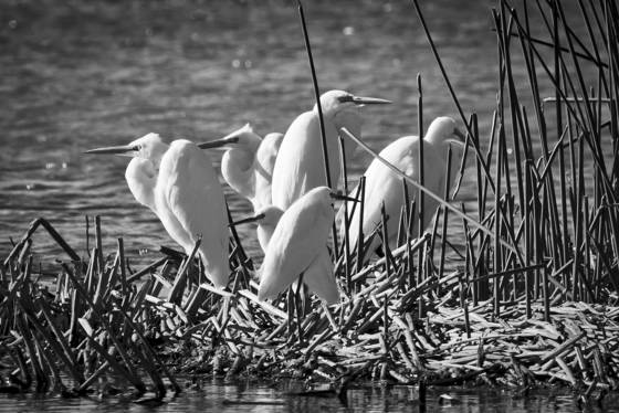 The egret hangout