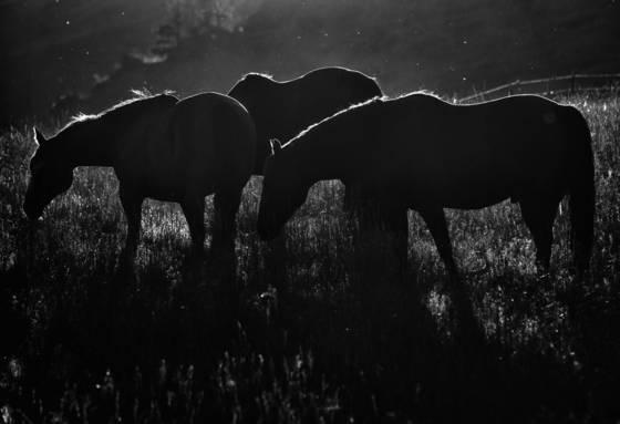 Evening graze