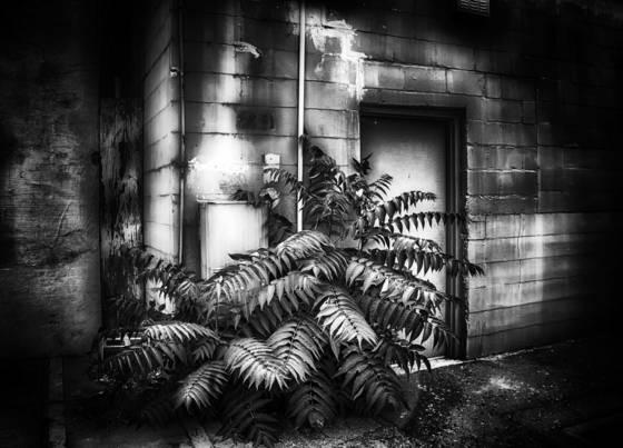 Door and the fern