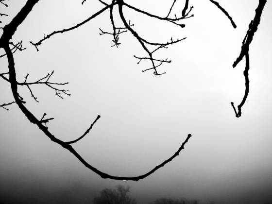 Branch and fog