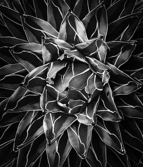Botanicals 3