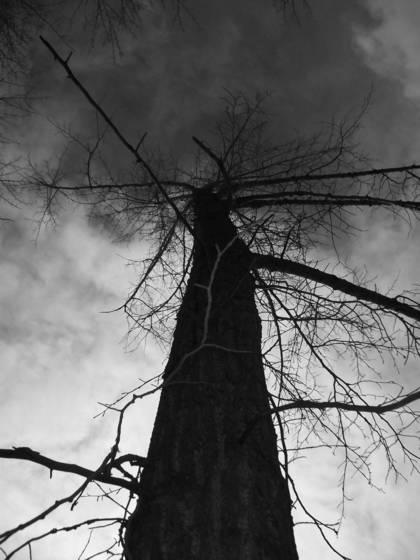 Scenic root 1