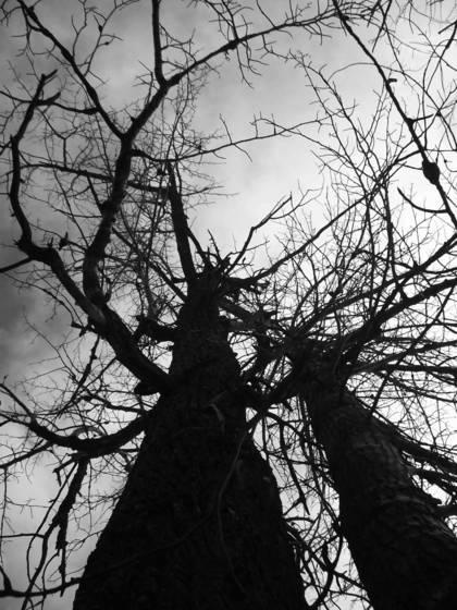 Scenic root 3