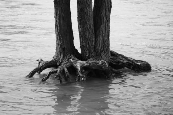 Scenic root 7