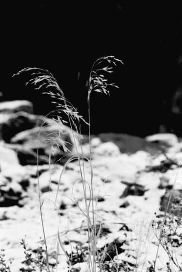 Colorado sprout
