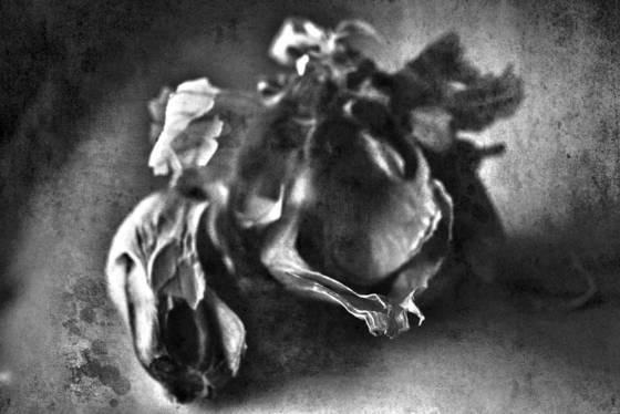 Garlic 10
