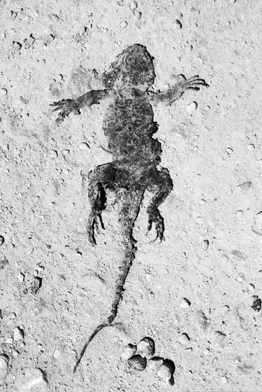 Squashed lizard