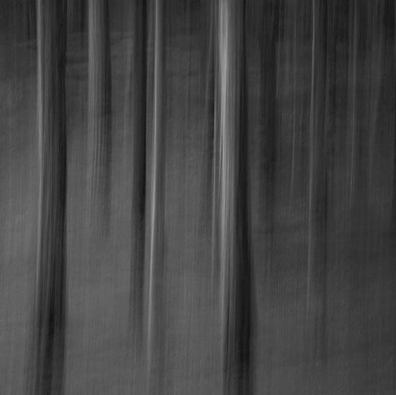 Cypress grove absrtact