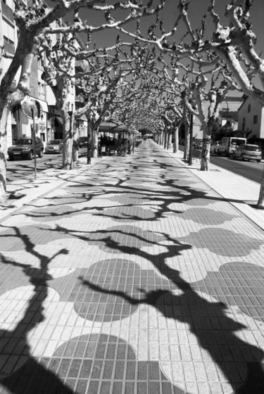 Sycamore shadows in balaguer