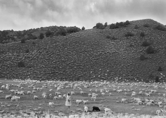 Black sheep white sheep