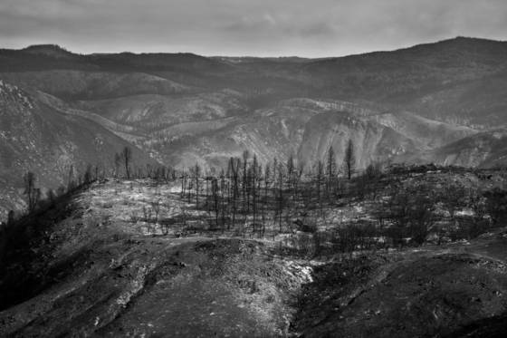 A charred landscape  the rim fire