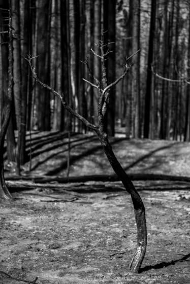 Lost soul the rim fire