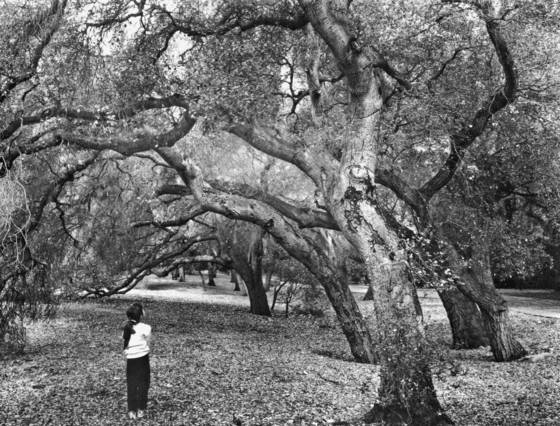Girl and oaks