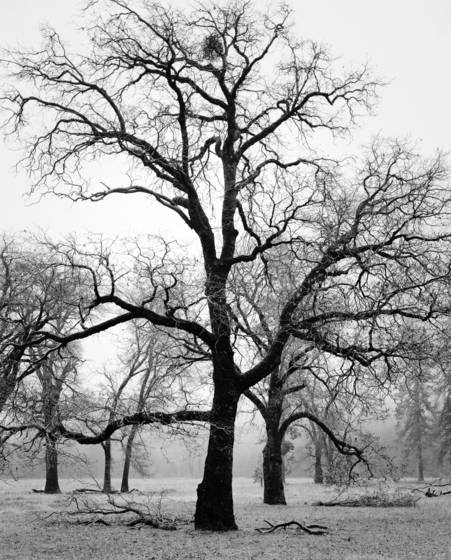 Winter in the park 9