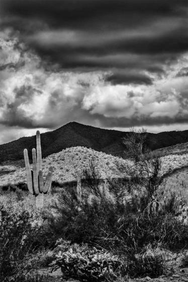 Mayo desert storm