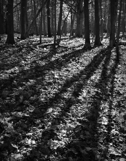 Forest light 7