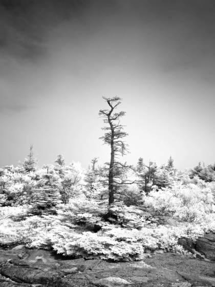 Acadia 17