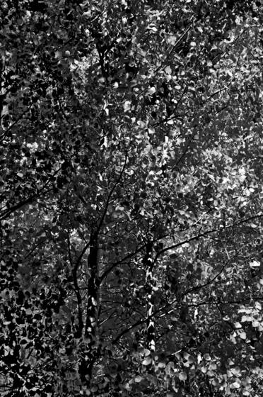 The trees dreamed pollock