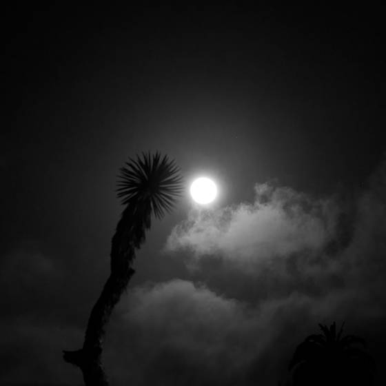 Palm tree and full moon