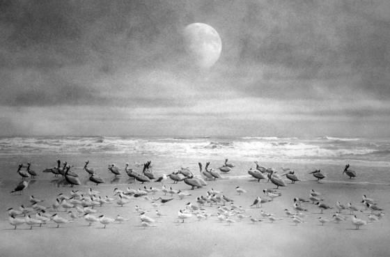 Seabird sanctuary 13