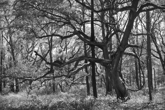 Oak hammock
