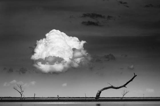 Dead tree and cloud