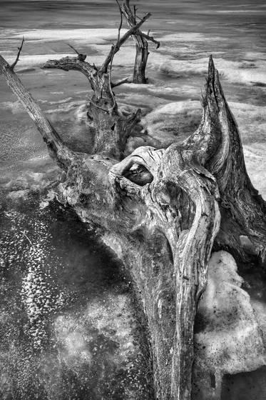 Stump 06