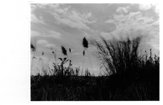 Whispering dune