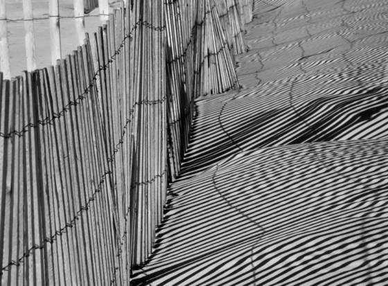 Beach fences 5197