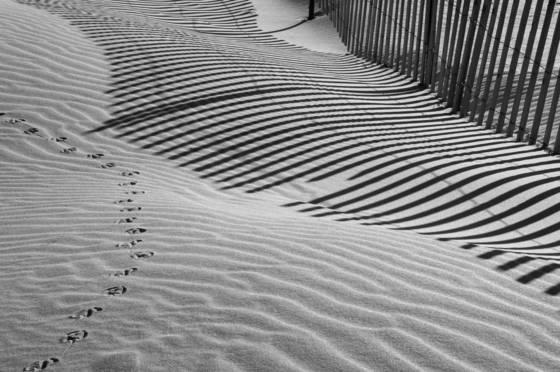 Beach fences 5232