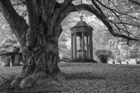 Beech tree and memorial
