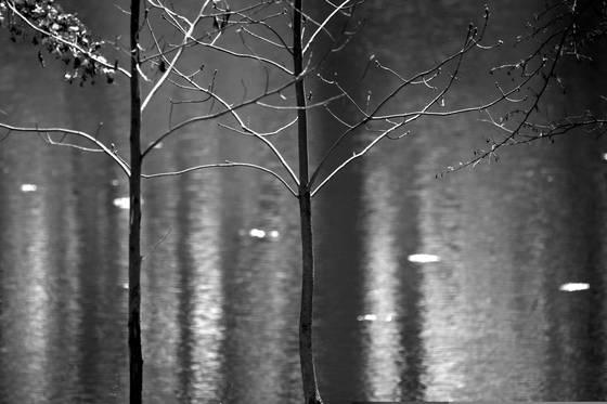 Pond rhythm