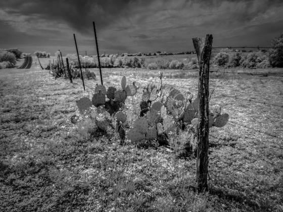 Dry range land