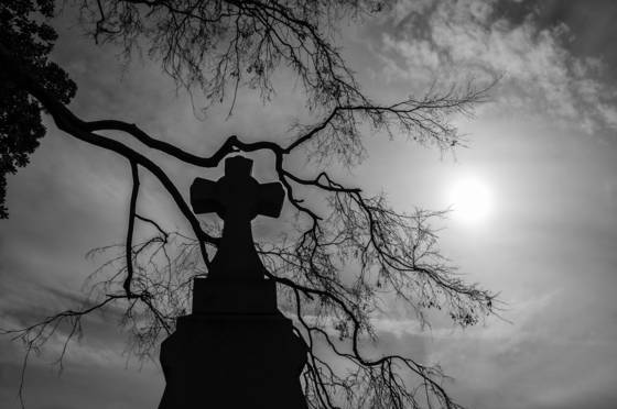 Branch framed cross